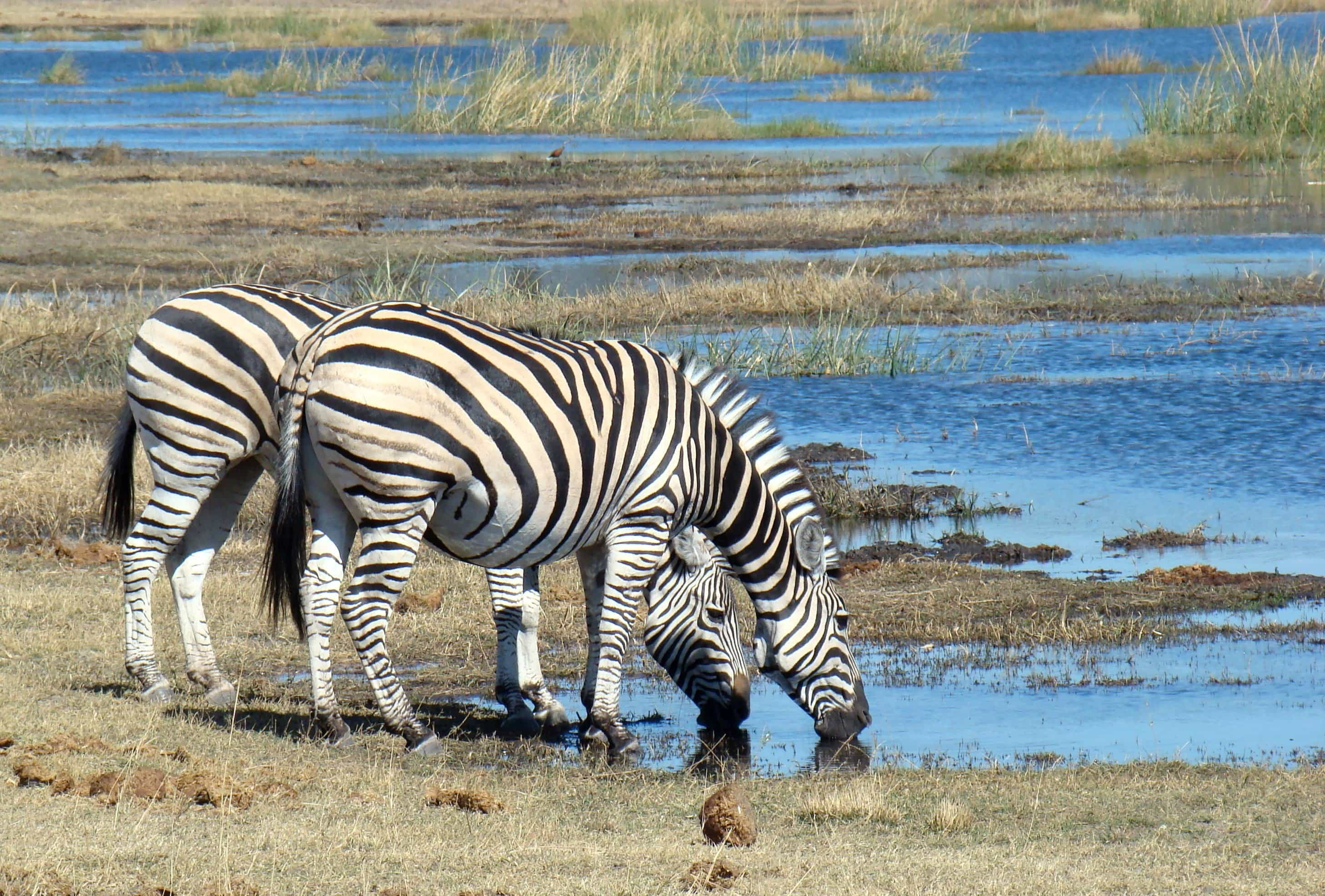Kruger, Chobe and Victoria Falls - trip of   in  Botswana, South Africa