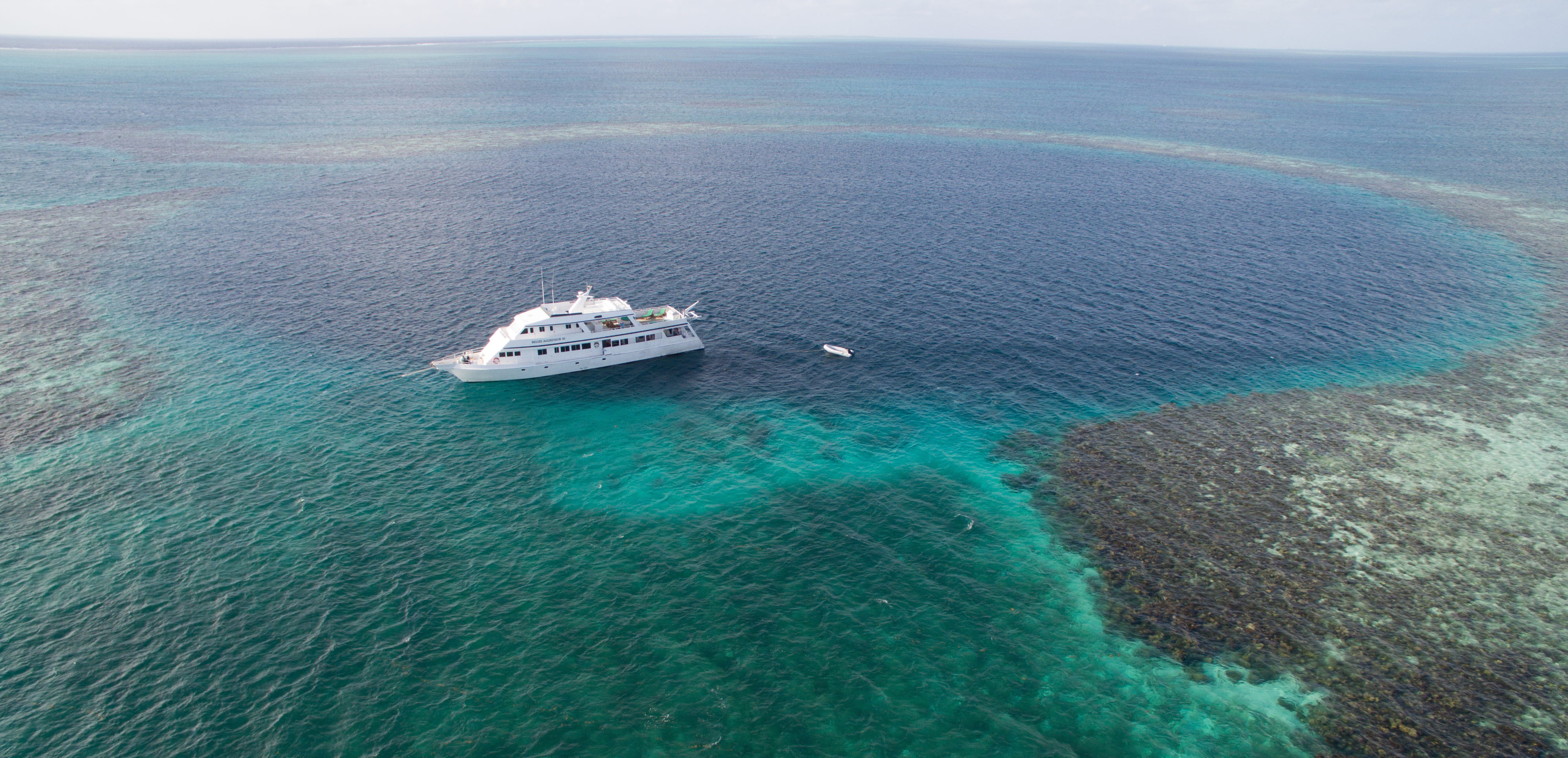 Liveaboard in Belize - trip of   in  Belize