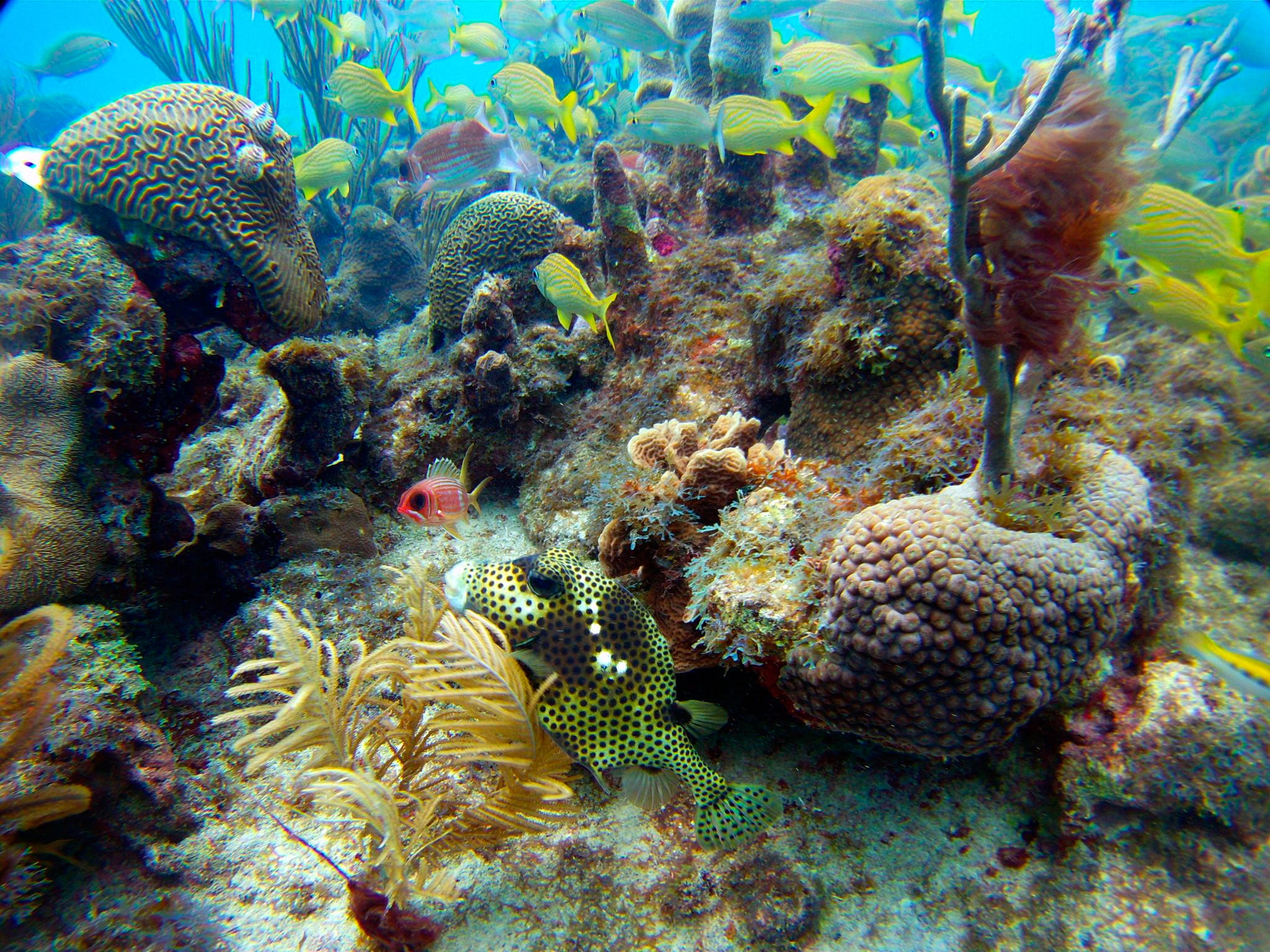 Diving in Providencia, San Andres - trip of   in  Colombia