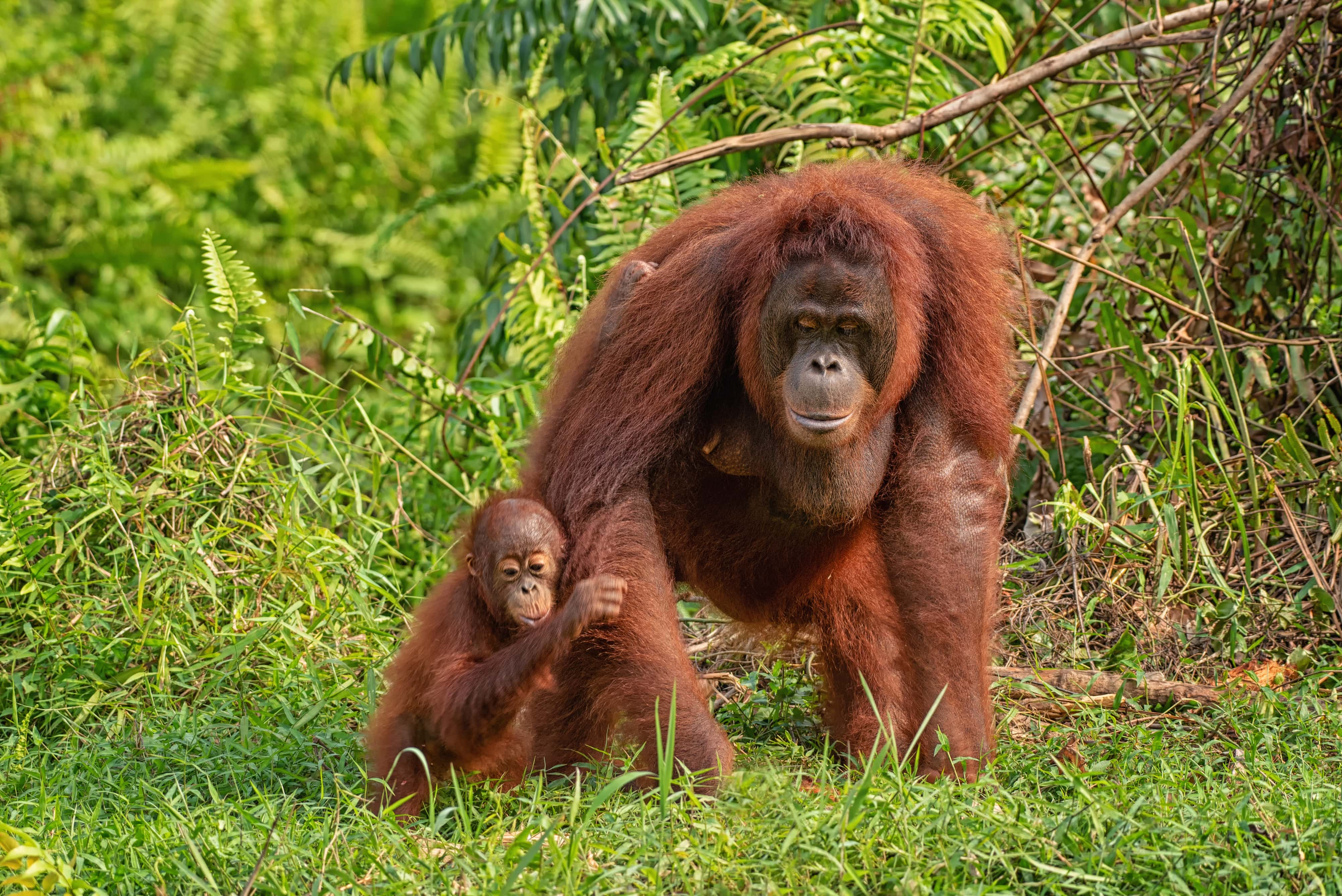 Natural parks in Borneo