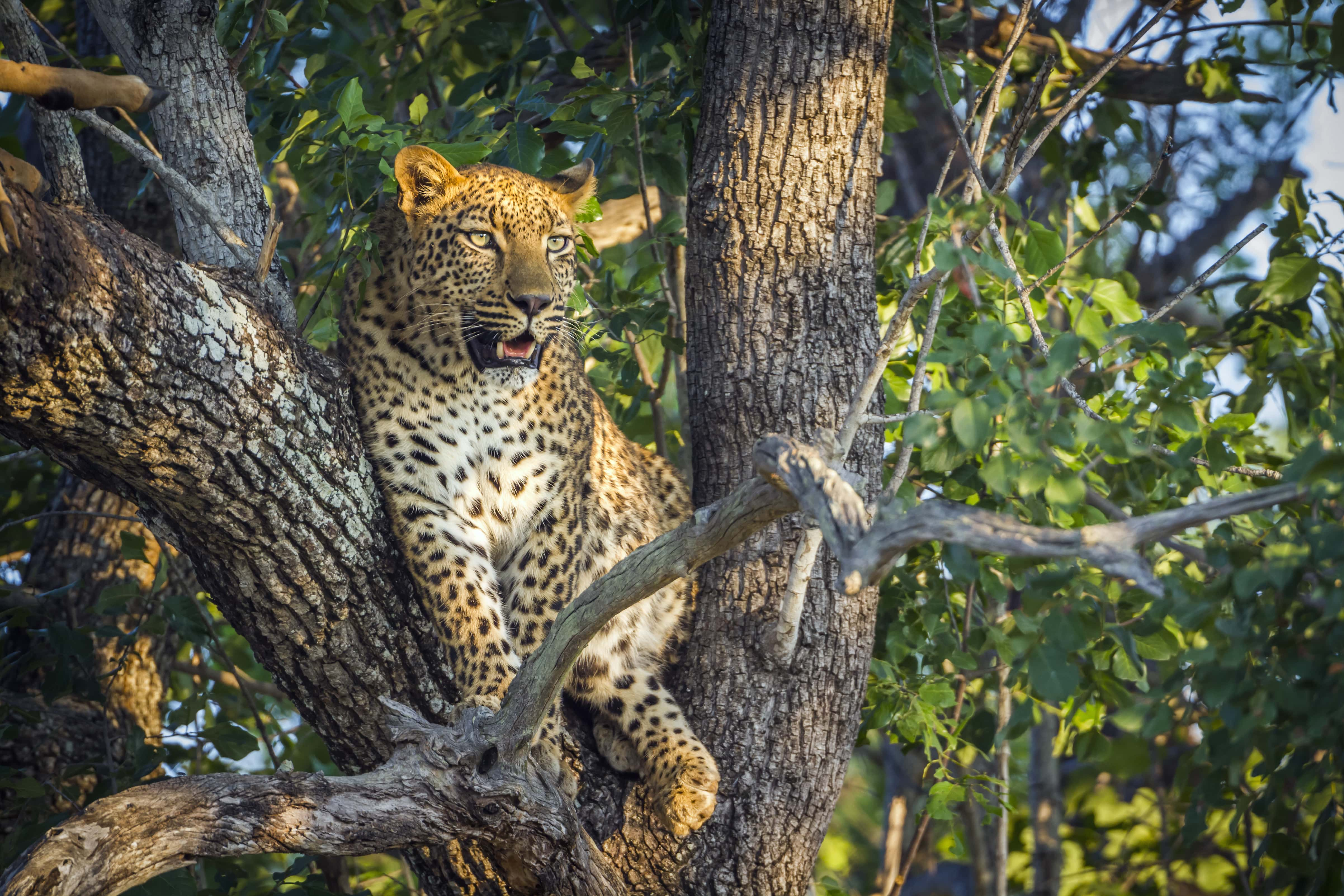 Mozambique& Kruger - trip of   in  Mozambique, South Africa