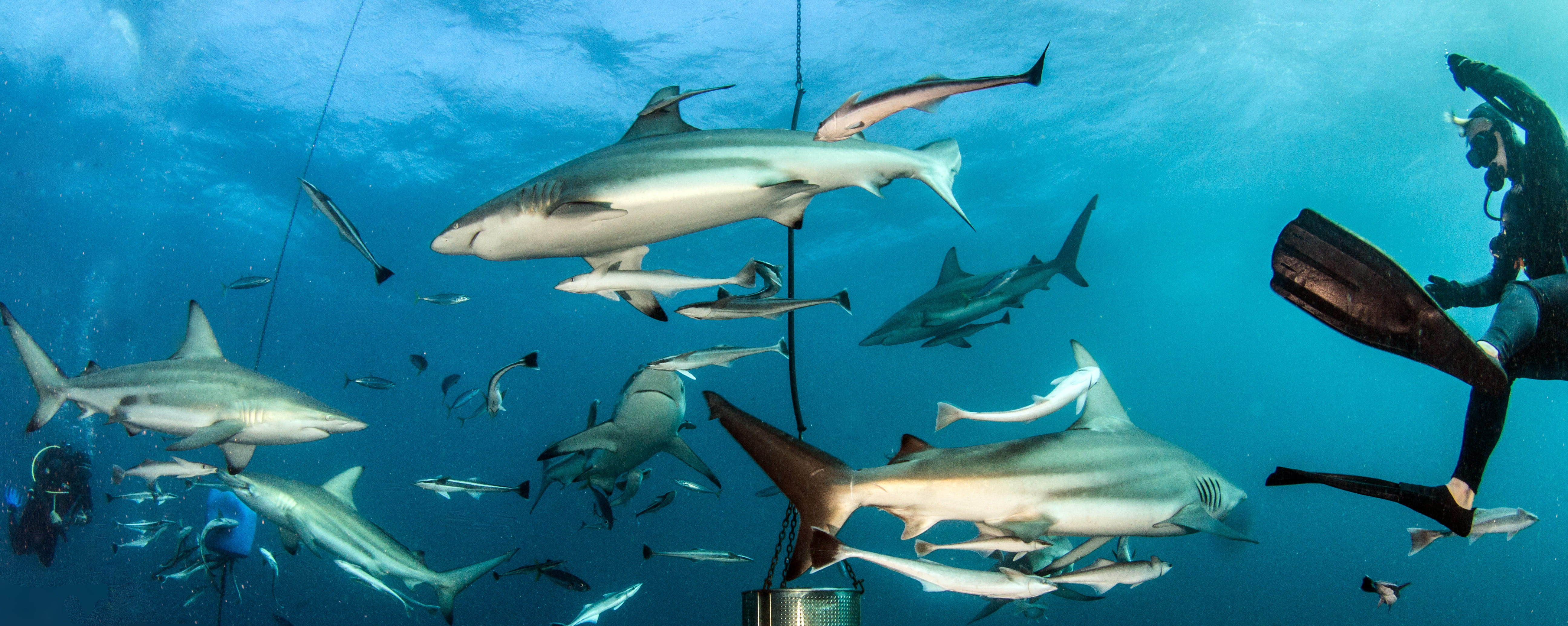 Diving in Aliwal Shoal and Sodwana - trip of   in  South Africa