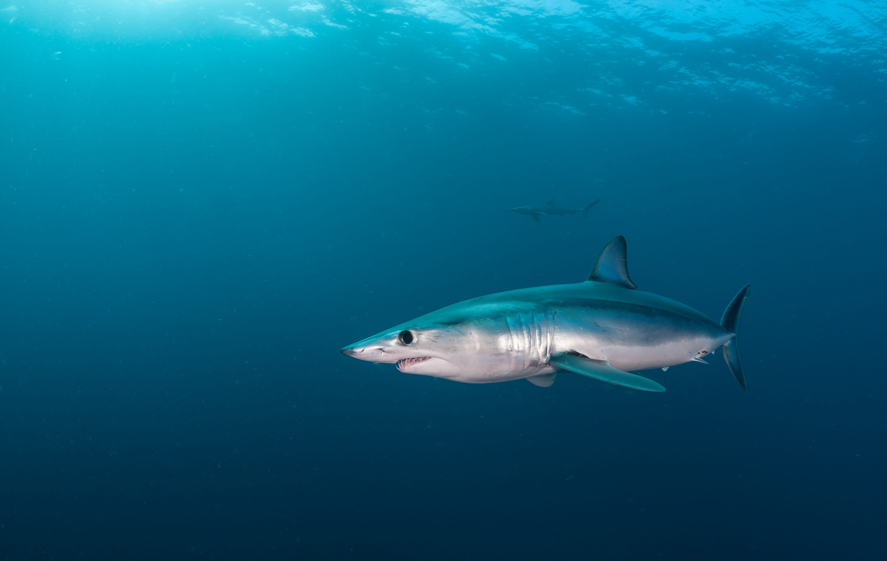 Diving in South Africa and Great White - trip of   in  South Africa